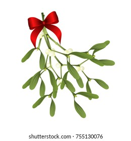 Mistletoe. Vector illustration of mistletoe sprig with red bow isolated on white background for Christmas cards and decorative design.
