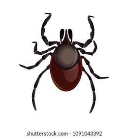 Mite parasites. Tick parasite. Acarus. Acarid vector illustration isolated on white background. Mite spider. Mite allergy. Mite epidemic.