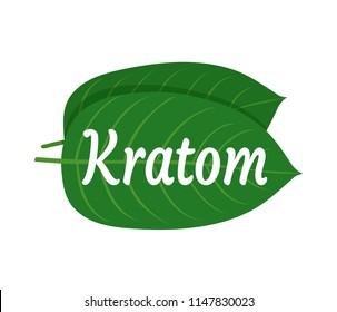 Mitragyna speciosa, kratom leaf logo template. Vector flat illustration icon design. Isolated on white background. Kratom plant drug leaf logo concept