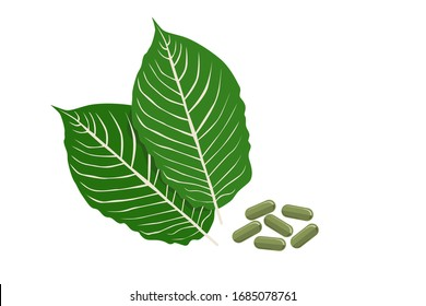 Mitragyna speciosa or kratom leaves with medicinal products in capsules on white background