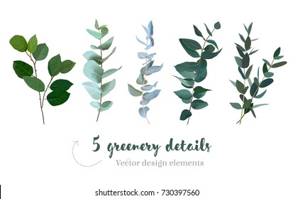 Mix of herbs and plants vector big collection. Cute rustic wedding greenery.True blue eucalyptus, salal, parvifolia foliage, leaves and stems. Watercolor style set. All elements are isolated