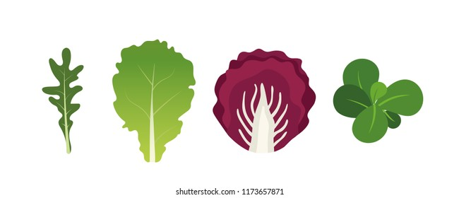 Mix of salad leaves. Arugula, lettuce, watercress and radicchio. Vector illustration set in flat style
