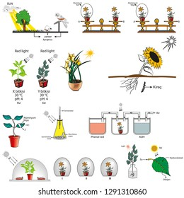 Mixed forms used in biology course, respiration and photosynthesis in plants