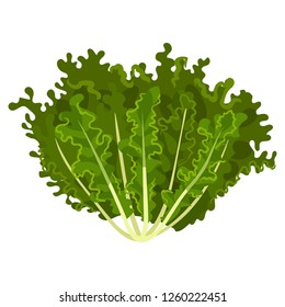 Mizuna fresh salad leaves, healthy organic vegetarian food, vector Illustration on a white background