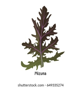 Mizuna kyona Japanese greens or spider mustard cultivated crop plant