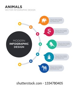 modern business infographic illustration design contains zebra, beetle, bird, blindworm, boar simple vector icons. set of 5 isolated filled icons. editable sign and symbols