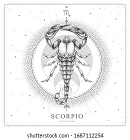Modern magic witchcraft card with astrology Scorpio zodiac sign. Realistic hand drawing scorpion illustration