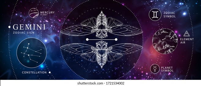 Modern magic witchcraft card with astrology Gemini zodiac sign. Realistic hand drawing butterfly or cicada illustration. Zodiac characteristic