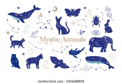 Modern witchcraft and mystic animals. Collection of mystical and magical, astrology illustrations and elements. Stars, constellations, moon, crystals. Flat vector illustration.