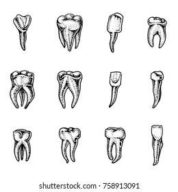molar teeth enamel, dental set. work of the dentist and care for children. oral cavity clean or dirty. health or caries human. engraved hand drawn in old sketch, vintage style. symbol of medicine.