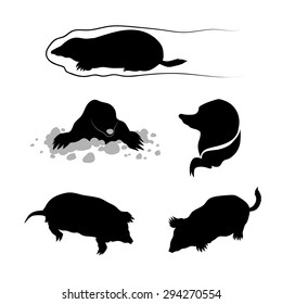 Mole icons and silhouettes. Set of illustrations in different poses.