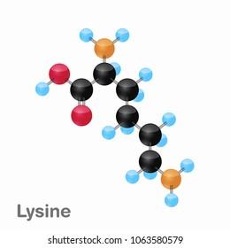 Lysine Foods Stock Vectors, Images & Vector Art | Shutterstock