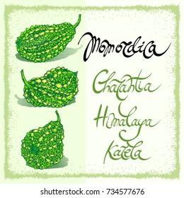 Momordica Charantia Bitter melon Himalaya Karela word phrase calligraphy lettering with momordica fruit hand drawn vector illustration
