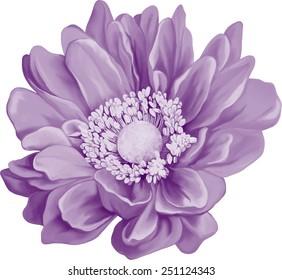 Mona Lisa flower, Purple light pink flower, Spring flower.Vector illustration Isolated on white background.