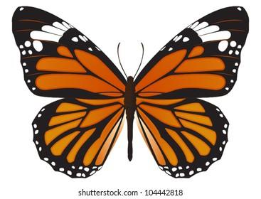 The Monarch butterfly (Danaus plexippus) vector