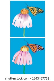 Monarch Butterfly feeds on nectar Set 1