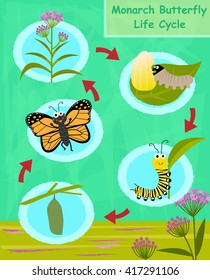 Monarch Butterfly Life Cycle - Colorful cartoon diagram of the monarch butterfly life cycle. Eps10