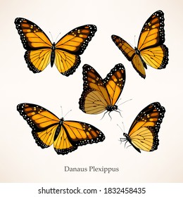 Monarch butterfly vector art in several different views and poses