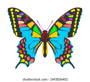 Monarch Butterfly vector with open wings in a top view. Flying migratory insect. Butterflies represents symbol of summer and nature beauty. Colorful butterfly art symbol illustration and tattoo sign.