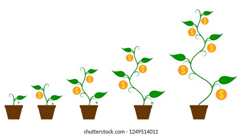Money coin plant in flower pot growing process from seed to big sprout plant with coins. Business management growth concept.