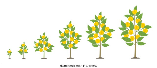 Money for growth. Money tree. Bank deposit phases set. Coin crop. Cash grow up animation progression.