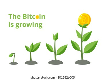 Money tree with bitcoins growing process. Bitcoin financial growth Concept. vector illustration in flat style