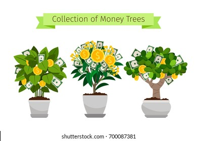 Money tree in flower pot collection. Vector illustration