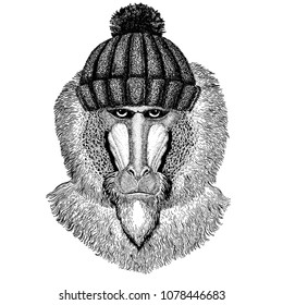 Monkey, baboon, dog-ape, ape Cool animal wearing knitted winter hat. Warm headdress beanie Christmas cap for tattoo, t-shirt, emblem, badge, logo, patch