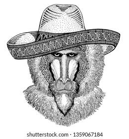 Monkey, baboon, dog-ape, ape wearing traditional mexican hat. Classic headdress, fiesta, party.