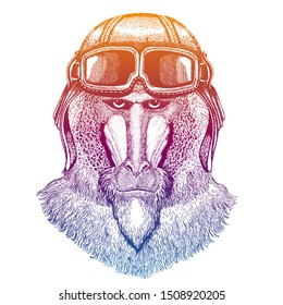 Monkey, baboon, dog-ape, ape wearing vintage aviator leather helmet. Image in retro style. Flying club or motorcycle biker emblem. Vector illustration, print for tee shirt, badge logo patch