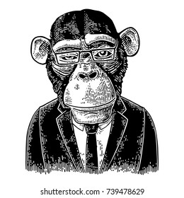 Monkey businessman dressed in human suit, tie and rectangular glasses. Vintage black engraving illustration for poster. Isolated on white background