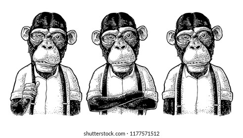 Monkey businessman dressed in the shirt and suspender. Three different poses. Vintage black engraving illustration for poster. Isolated on white background