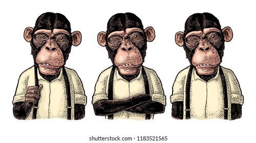 Monkey businessman dressed in the shirt and suspender. Three different poses. Vintage color engraving illustration for poster. Isolated on white background