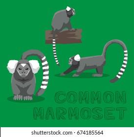 Monkey Common Marmoset Cartoon Vector Illustration