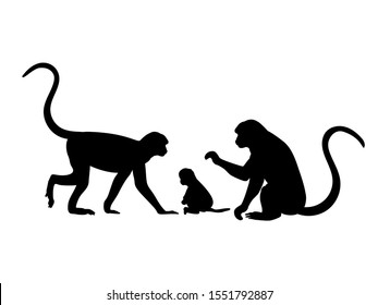 Monkey family. Silhouettes of animals. Vector illustrator