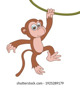 Monkey hanging on liana. Cartoon character Chimpanzee isolated on white background. Template of cute african animal. Education card for kids learning animals. Vector design in cartoon style