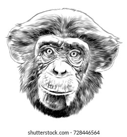 monkey head sketch vector graphics black and white monochrome pattern