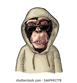 Monkey hipster with sunglasses dressed in the hoodie. Vintage color engraving illustration. Isolated on white background. Hand drawn design element for poster