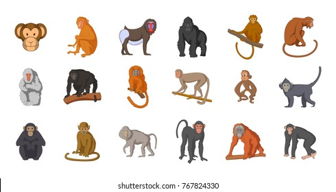 Monkey icon set. Cartoon set of monkey vector icons for your web design isolated on white background