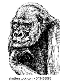 Monkey ink drawing. Vector portrait of gorilla propping up its head