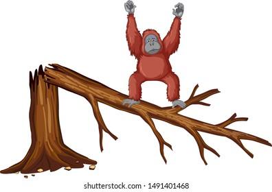 Monkey on broken branch illustration