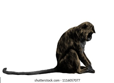 monkey sitting sideways with head down, sketch vector graphic color drawing on white background