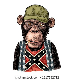 Monkey smokes cigarette in trucker cap, checkered shirt, t-shirt with the flag of the Confederate. Vintage color engraving illustration for poster. Isolated on white background