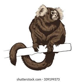 Monkey. Vector illustration