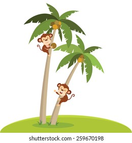 Monkeys climbing coconut tree. A monkey plucking the coconut.