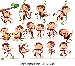 Monkeys doing different actions illustration