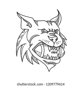 Mono line illustration of a head of a Canada lynx, bobcat, Eurasian lynx or Iberian lynx biting an American football ball viewed from front  done in black and white monoline style.