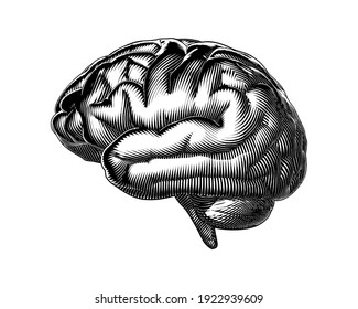 Monochrome abstract vintage engraved woodcut human brain side view vector illustration isolated on white background