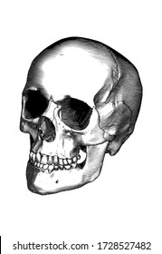Monochrome black vintage engraved drawing human skull close jaw perspective front oblique angle view vector biology illustration isolated on white background