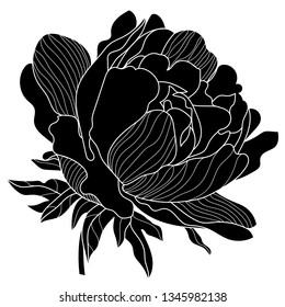 monochrome black and white peony flower isolated on white background. Hand-drawn contour lines and strokes.Chinese,Oriental,eastern peony flower.Hand Drawn Floral Elements for Design, EPS10 Vector .